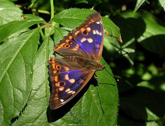 Butterflies of tempera...