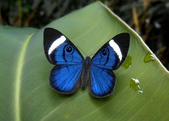 Amazonia Blue - Fairytales Of Amazonia